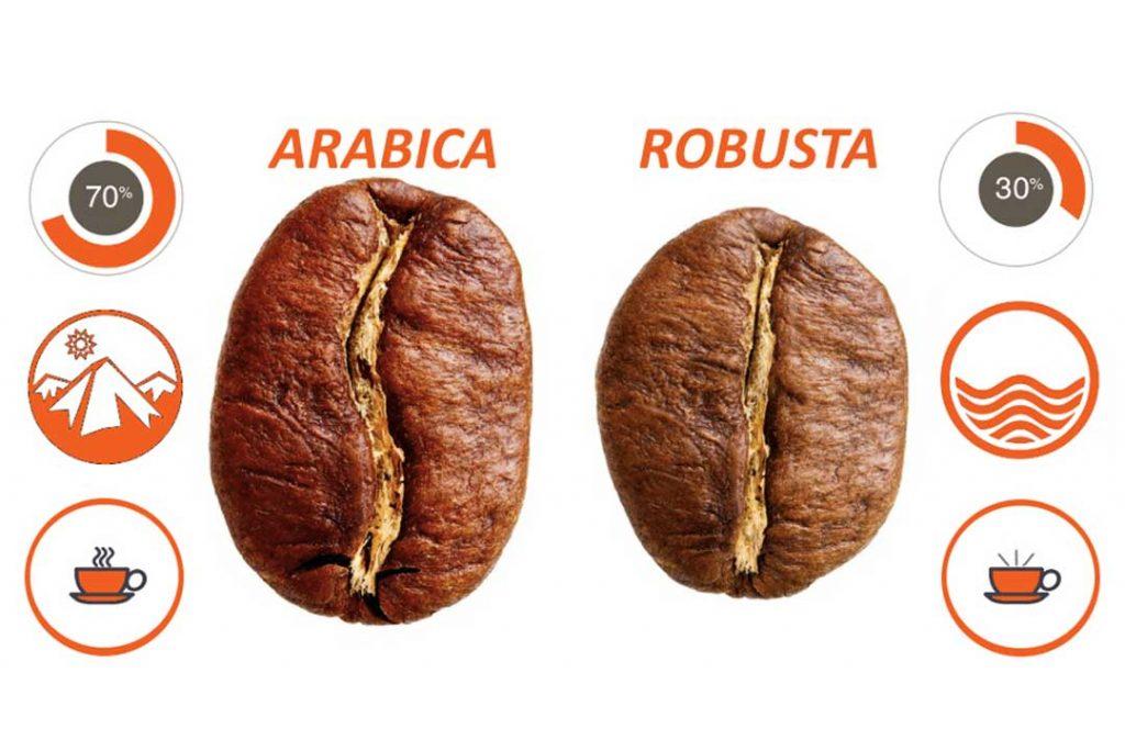 Phân biệt cà phê Robusta và cà phê Arabica