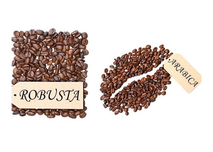 Tìm hiểu về cà phê nguyên chất Robusta