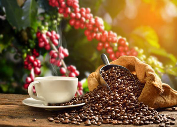 Những tiêu chí quan trọng cần lưu ý khi mua cà phê nguyên chất sỉ-1